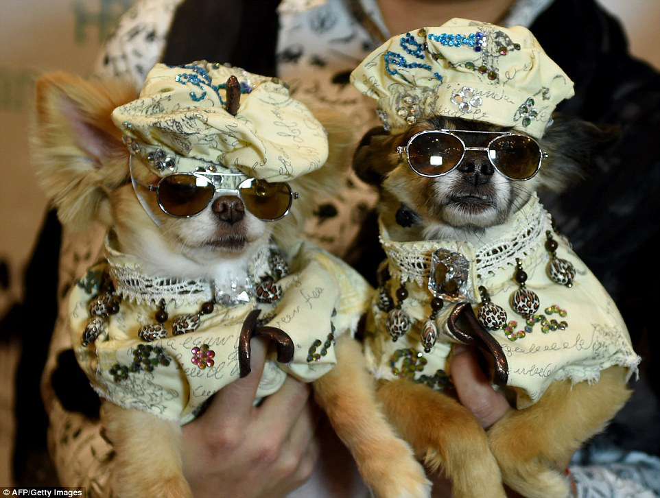 Every dog has its day! Furry fashionistas dress up for the 2017 New York Pet Fashion Show Swish London