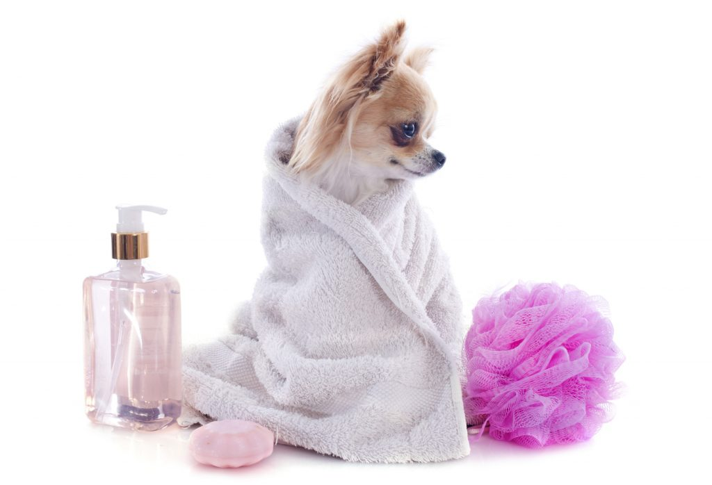 Check Out Our 6 Favorite Beauty Products—for Dogs! Swish London