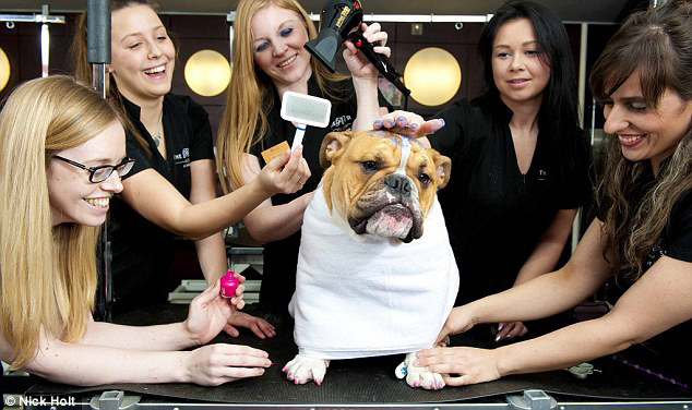 The Pet Spa Swish London
