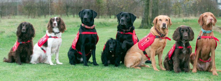Medical Detection Dogs Swish London