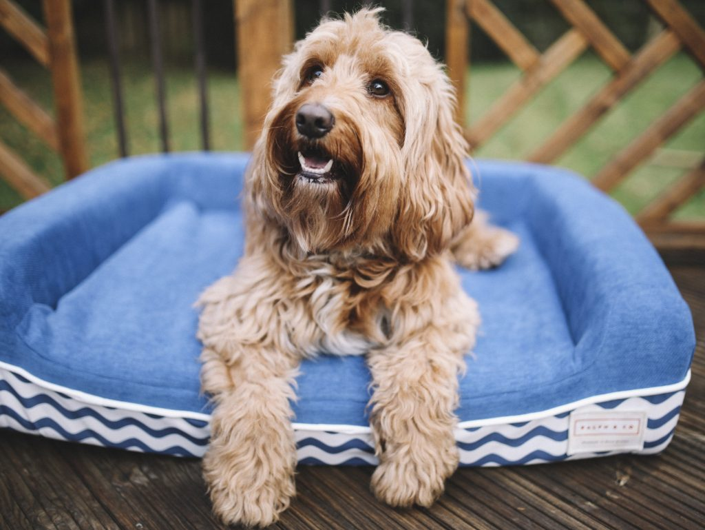 Ralph & Co Blends the Latest Tech, Great Designs and Eco-Features with Launch of 'World's Best Dog Bed' on Indiegogo Swish London