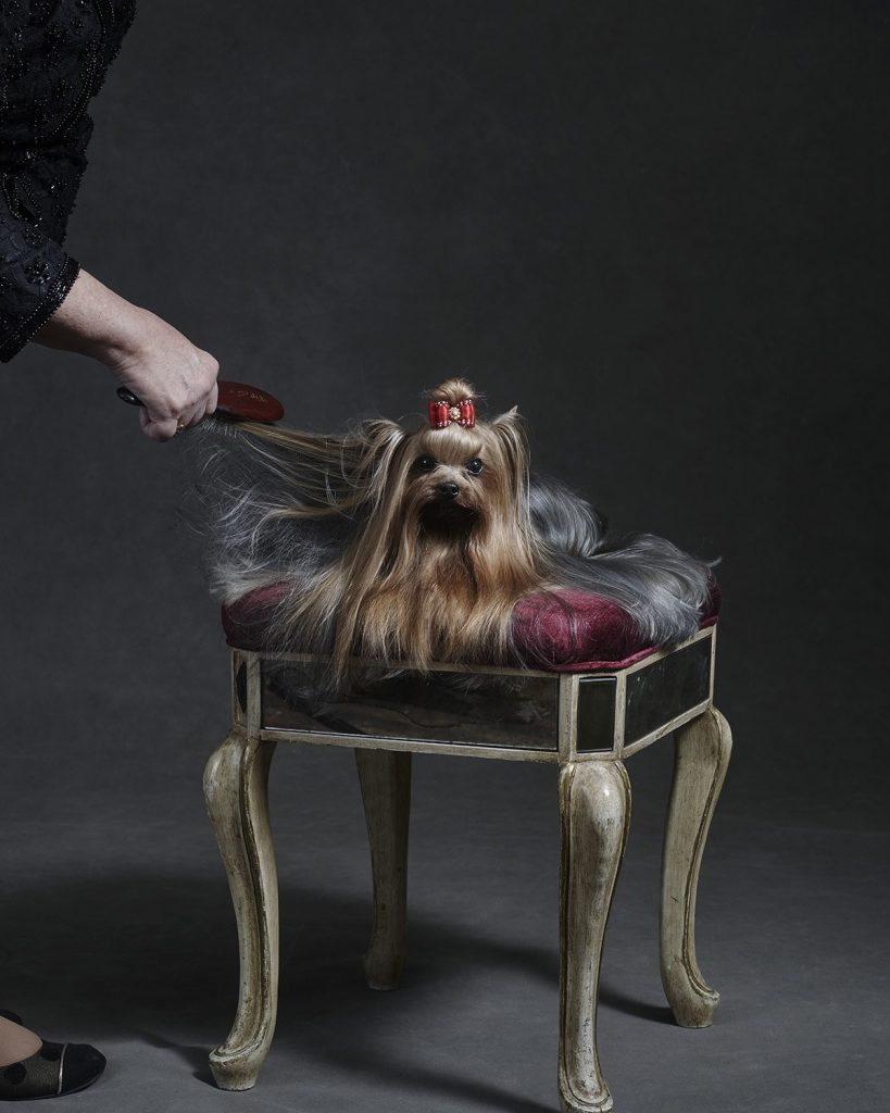 BEST IN SHOW: 12 SECRET BEAUTY RITUALS BEHIND WESTMINSTER'S FURRY STARS Swish London