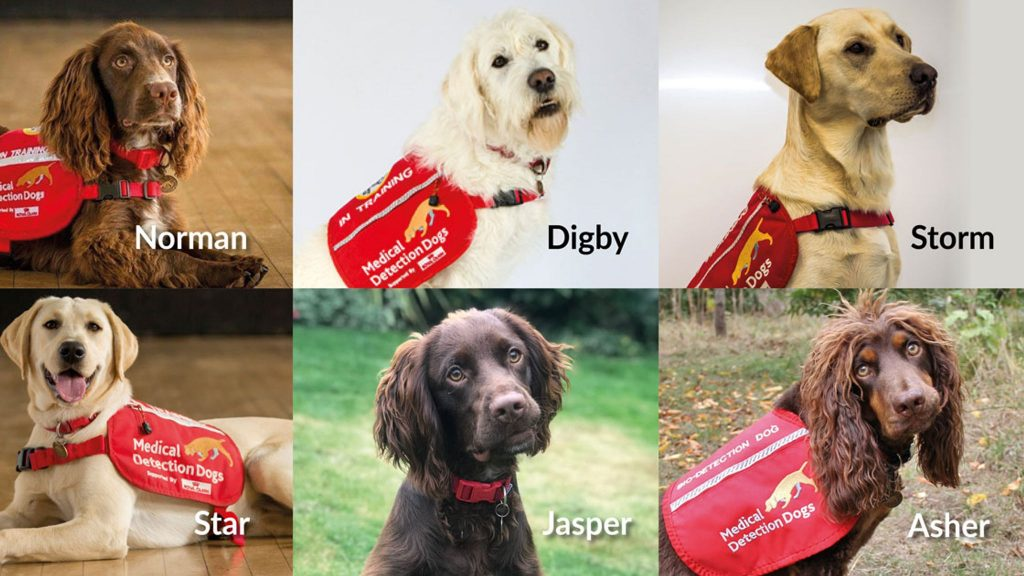 Medical Detection Dogs help the fight against Covid19 Swish London
